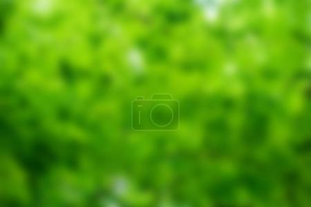 Photo for Green blurred leaves background with sunlight - Royalty Free Image