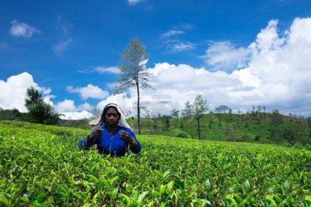 Female tea picker