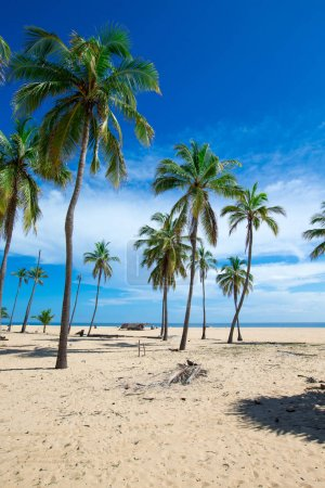 beach with palms and tropical sea view