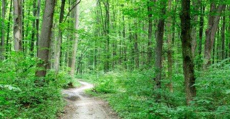 Photo pour Des arbres forestiers. nature vert bois lumière du soleil milieux - image libre de droit