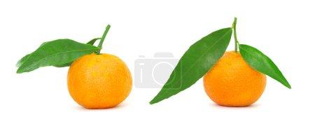 Photo pour Mandarin isolé sur fond blanc - image libre de droit