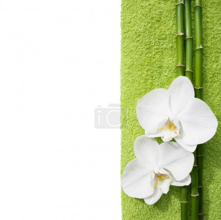 Two  orchids and branches of bamboo.