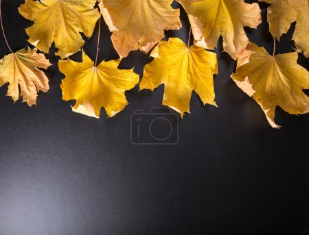 Autumn background with realistic maples