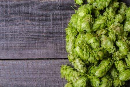 Fresh green hops