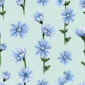 Watercolor illustrations of chicory flowers. Seamless pattern
