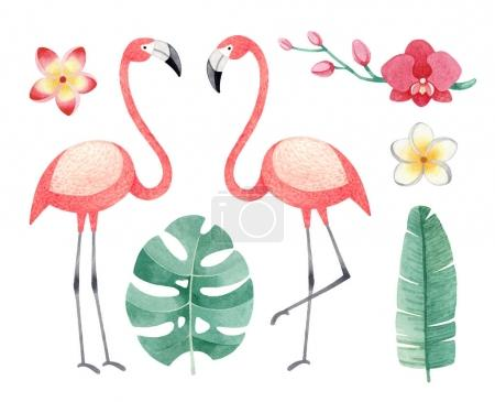 Watercolor illustrations of flamingos, tropical flowers and leaves