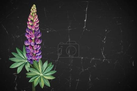 A watercolor illustration of  lupines. Perfect for greeting cards or invitations
