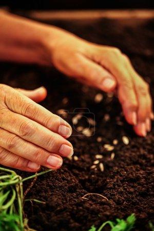 Hand of elderly woman throwing seeds in dirt.