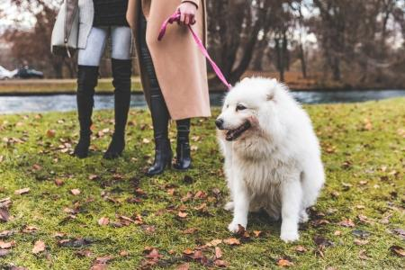 White dog on leash at park with two women