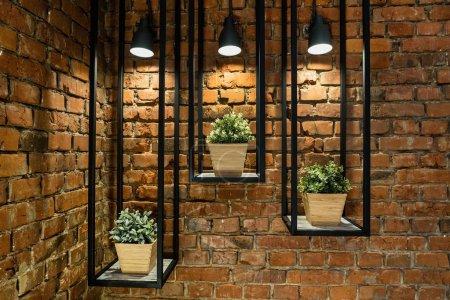green plants in pot