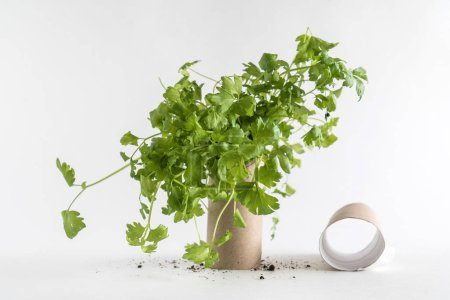 Toilet paper roll recycled as a seedling planters...