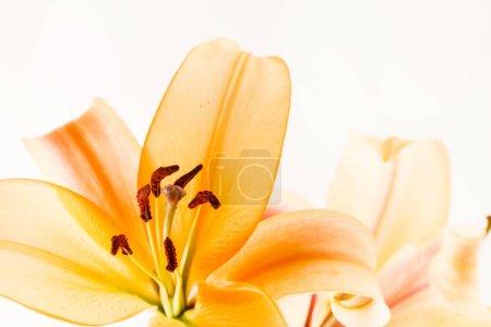 Beautiful nice lilies