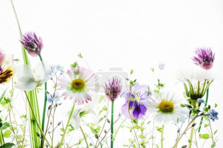 Photo for Tender spring flowers isolated on white background - Royalty Free Image