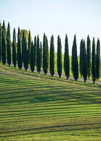 traditional Tuscany landscape, nature. Italy