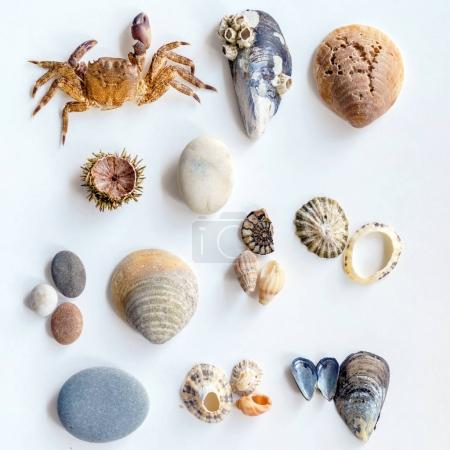 Collection of a seashells on white background, close up