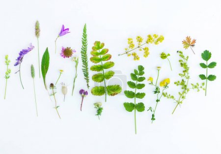 natural composition. plants on white background