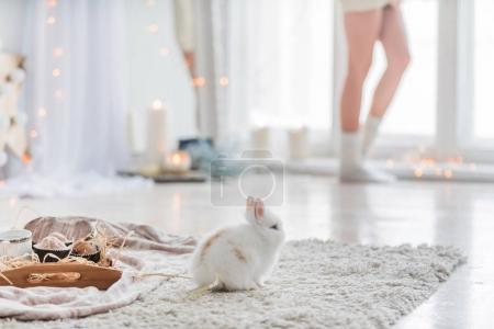 Photo pour Femme et beau lapin à la maison - image libre de droit