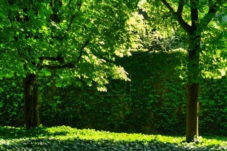 sunny summer park. Nature