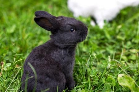 baby  rabbit on grass