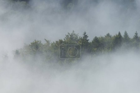 Fog covering green forest in mountains