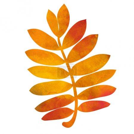 bright rowan leaf
