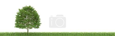 Photo pour Arbre et herbe sur fond blanc (rendu 3d ) - image libre de droit