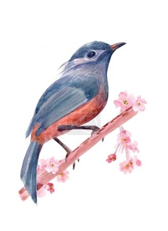 Photo for Hand drawn cute bird on almond blossoming twig. watercolor painting - Royalty Free Image