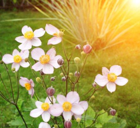 Photo pour Fond d'été avec fleurs, herbe verte et soleil - image libre de droit