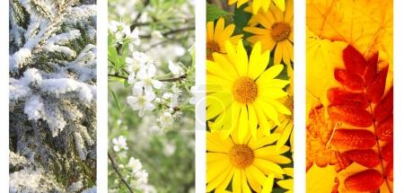 Photo for Four seasons of year. Vertical nature banners with winter, spring, summer and autumn scenes - Royalty Free Image