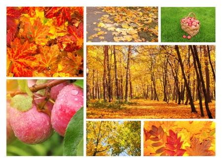 Photo for Collection of photos with autumn leaves, forest and apples - Royalty Free Image