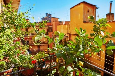 Balcony of a house in Rome, surrounded by lemon trees