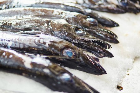 Atlantic largehead hairtails on traditional fish market in Funchal