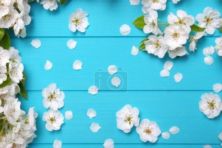 Photo pour Fleur de printemps sur fond de bois bleu. Vue de dessus, plan plat . - image libre de droit