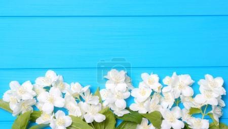 Photo pour Fleurs de printemps sur fond en bois - image libre de droit