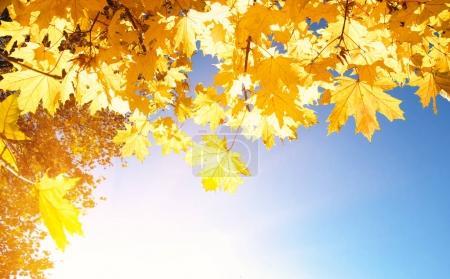 Photo pour Feuilles d'automne au soleil - image libre de droit