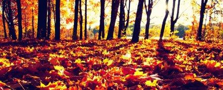 Photo pour Arbres d'automne au soleil dans le parc - image libre de droit
