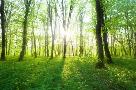 Forest in  morning