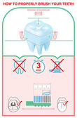 How to brush your teeth properly Education dentistry infographics