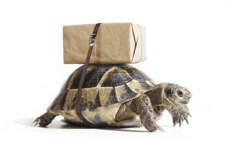 Turtle with shipping box on a back, isolated on white. Delivery concept.