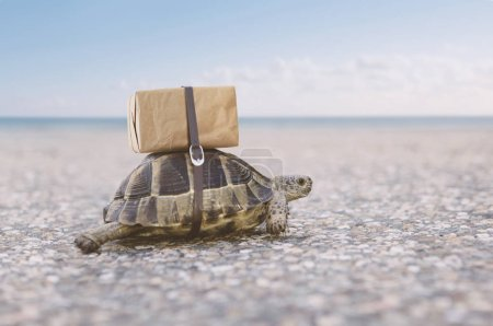 Turtle delivering shipping box on a back.