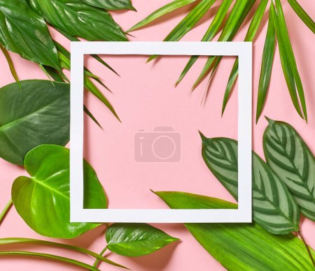 Photo for Tropical leaves and white frame on pink background, top view - Royalty Free Image
