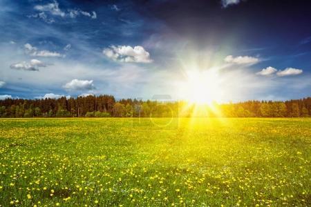 Photo pour Pâturage d'été sur coucher du soleil, les rayons de soleil et de ciel blu. Avec la lumière parasite et la fuite de lumière - image libre de droit