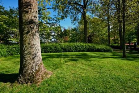 Green lawn in Keukenhof flower garden, Netherlands