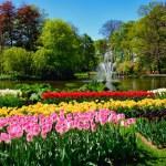 Blooming tulips flowerbeds in Keukenhof flower gar...