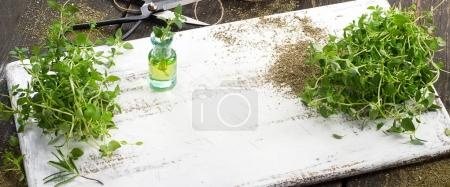 Thyme on old white wooden board....