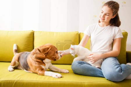 animals communication on the sofa