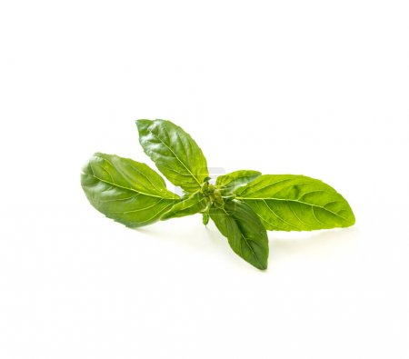 Photo for Green basil herb leaves isolated on white background. - Royalty Free Image