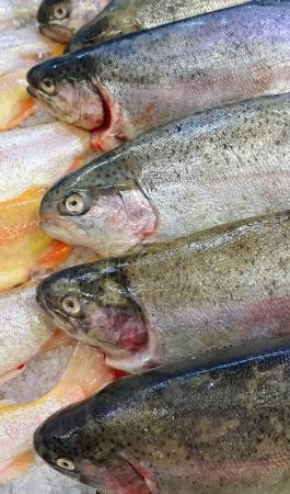 Fresh trout fish for sale in market