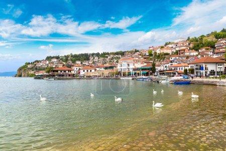 White swans on Ohrid lake