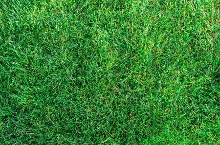 Foto de Campo del parque de la textura de la fresca hierba verde como fondo, vista superior, horizontal - Imagen libre de derechos